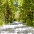 L'oasi WWF del lago di Alviano, un viaggio nella natura