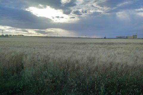 Tavoliere terreni agricoli