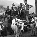 La tradizione alimentare contadina nell'Abruzzo interno: la vendemmia (II).