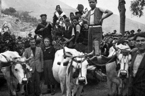 Abruzzo vendemmia trasporto buoi