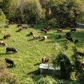 Dèsarpa o smonticazione: la transumanza nella Valle d'Aosta