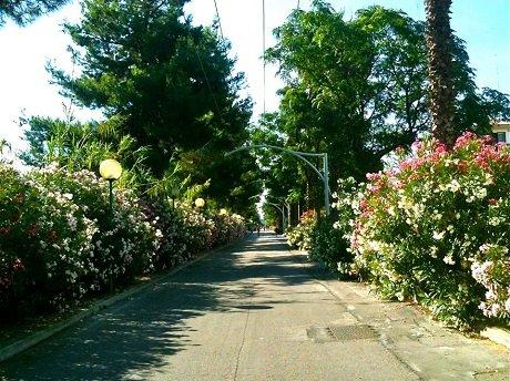 Strada Parco in fioritura