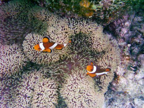 Australia Green Island barriera corallina
