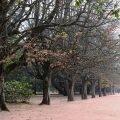 Oporto parco fondazione serralves
