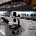 ricerca fisica scienze tecnologie chimica