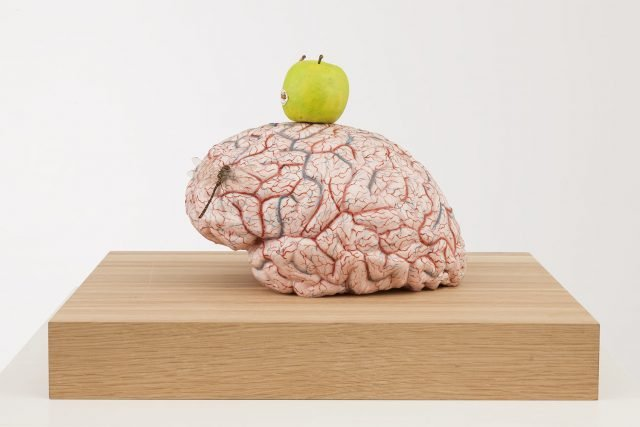 Brain of an atheist, 2014; silicon, plgment, wax, wood, metal, insects; 50x45x31,5 cm; Foto: Pat Verbruggen