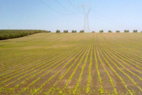 suolo coltivazioni biodiversità
