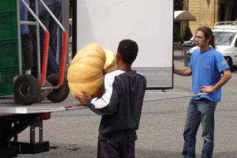 due lavoratori che caricano una zucca su un camion