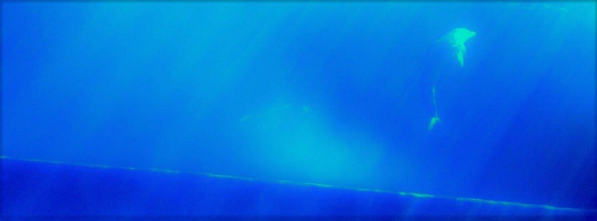 autismo colore blu