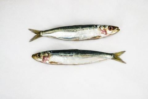 pesce alimentazione acidi grassi polinsaturi