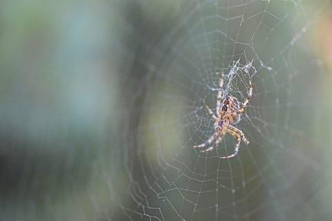 tela e ragno