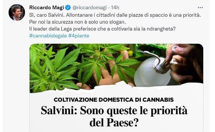 Riccardo Magi cannabis
